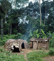 Pygmy camp with leaf and bark huts