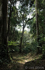Rain forest of Gabon