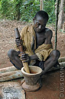 Pygmy traditional medicine