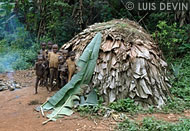 Hemispheric hut of the Baka Pygmies