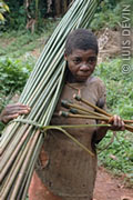 Pygmy woman gathering plant fibers