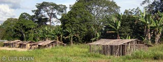 Huts of the Bakoya Pygmies and Bakota