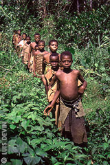 African Pygmies in the rainforest