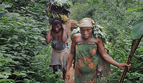 Food gathering expedition in the rain forest (Baka Pygmies of Cameroon)
