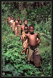 African Pygmies in the rainforest of Cameroon